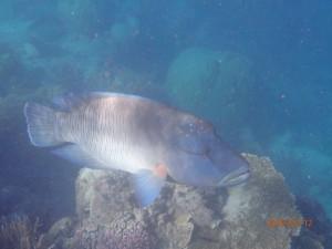 The big fish the boys finally captured on camera.