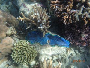 Gorgeous blue coral - pestered the boys to take a picture of this instead of the big fish they kept chasing.